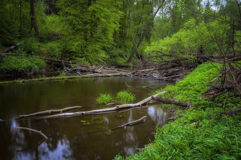 река,природа,пейзаж,весна,зелень,подмосковье Весной все оживает!photo preview