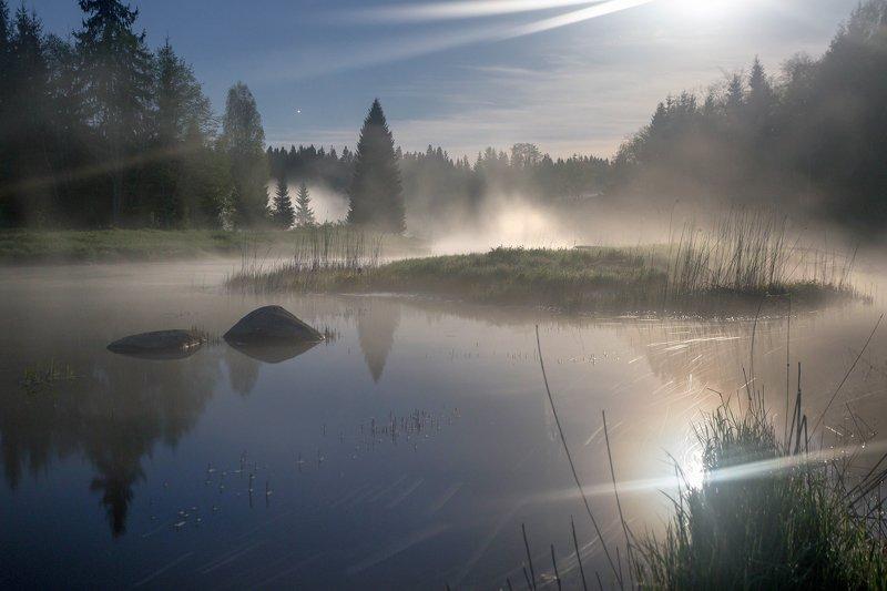 луна ,туман, река, май Лунный свет на лесной рекеphoto preview