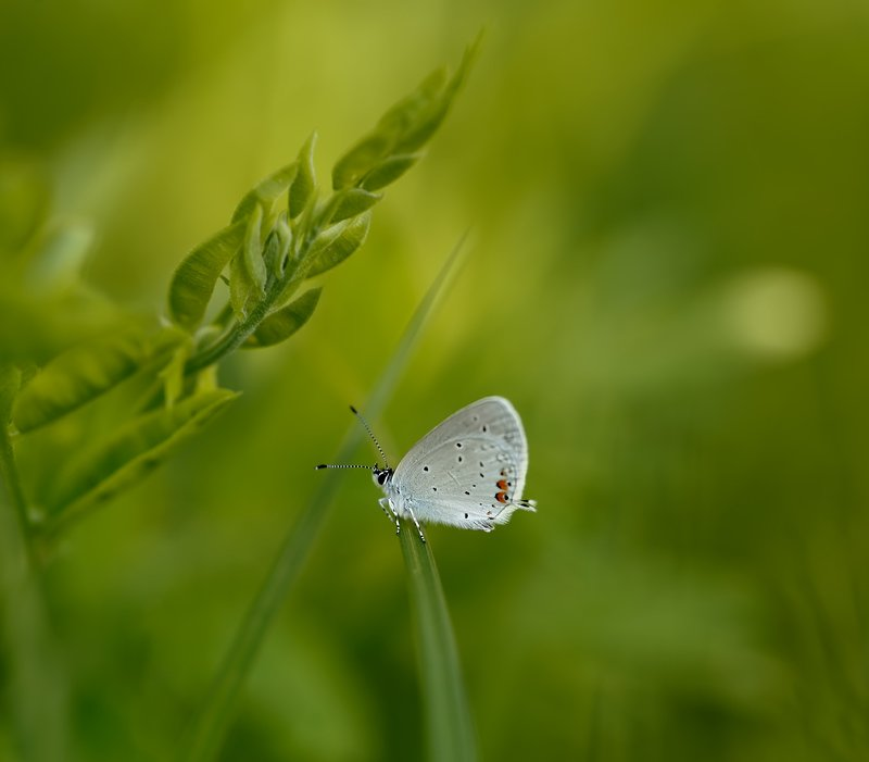 макро, бабочка, весна зелёный мирphoto preview