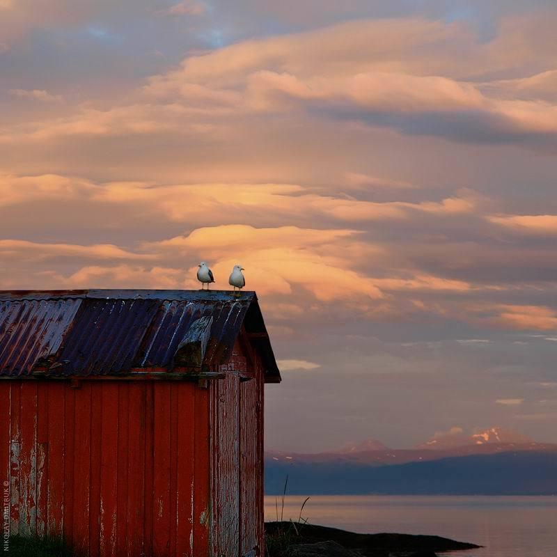 пейзаж две чайки. ночь. Норвегияphoto preview