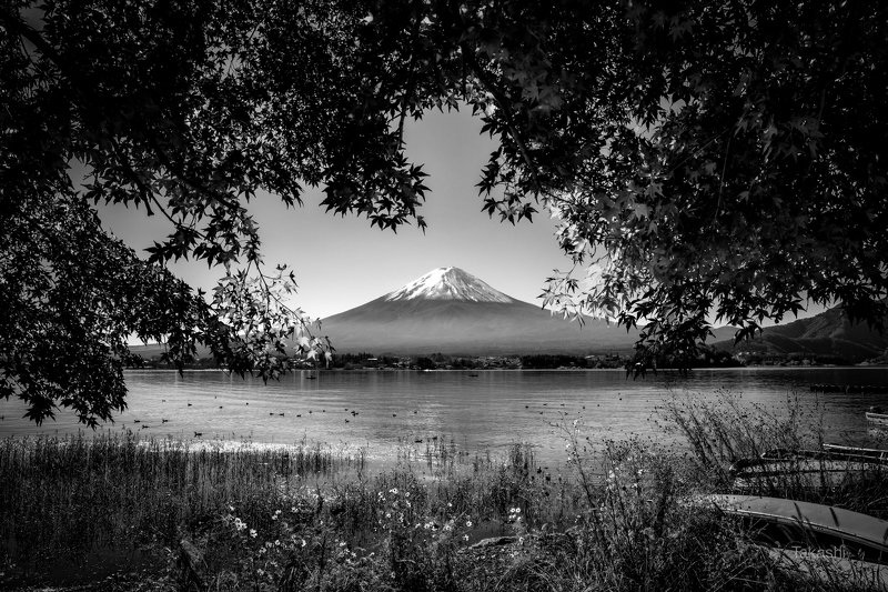 fuji,mountain,japan,tree,leaf,autumn,lake,water Colorful curtainphoto preview