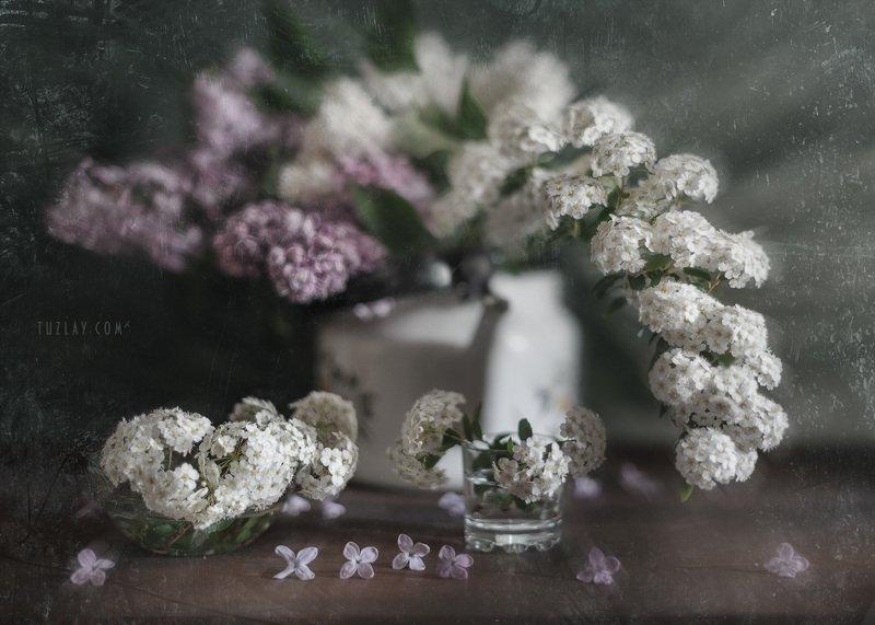 спирея, невеста, листки спиреи, цветок спиреи, сирень, цветки сирени, невеста в чайнике, весна в стакане, весна в чайнике Невеста с сиренью в чайнике #2photo preview