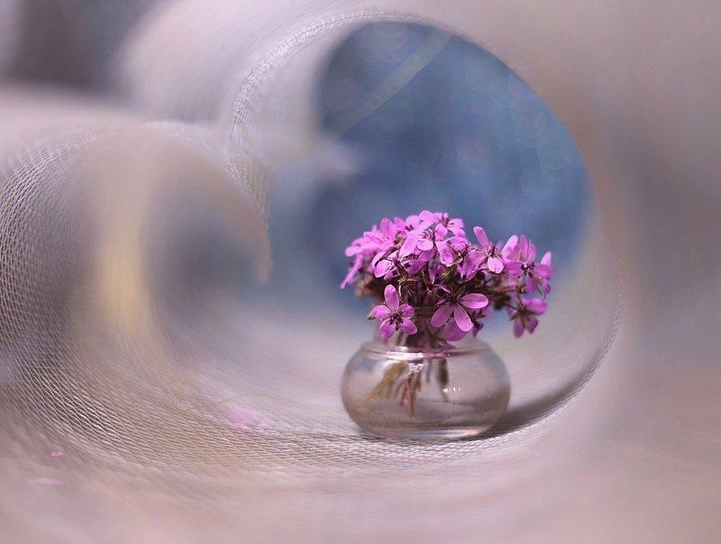 ... polne kwiatyphoto preview
