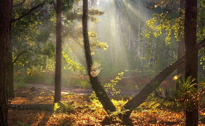 landscape, пейзаж, утро, лес,  деревья, солнечный свет,  солнце, природа, солнечные лучи,  прогулка, паутина утроphoto preview