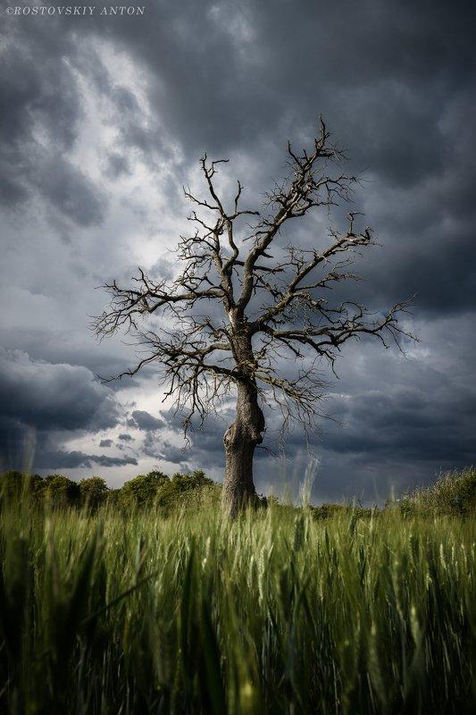 фототур, Тоскана, Италия, фотопеткшкствие, дерево, гроза, тучи, перед грозойphoto preview