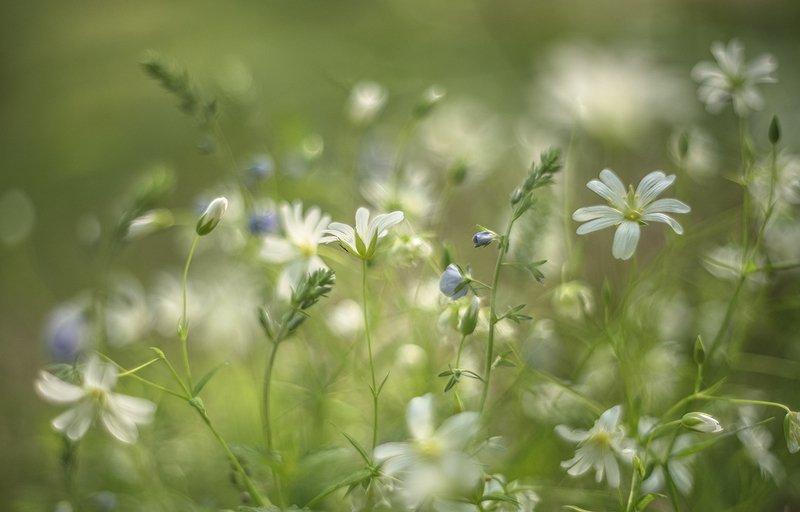 цветочки, травка, утро, май, свет, позитив, настроение, воронеж, мещеряков геннадий Май в лесу...photo preview
