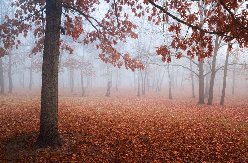 лес, осень, ноябрь, туман, белый Осязаемыйphoto preview