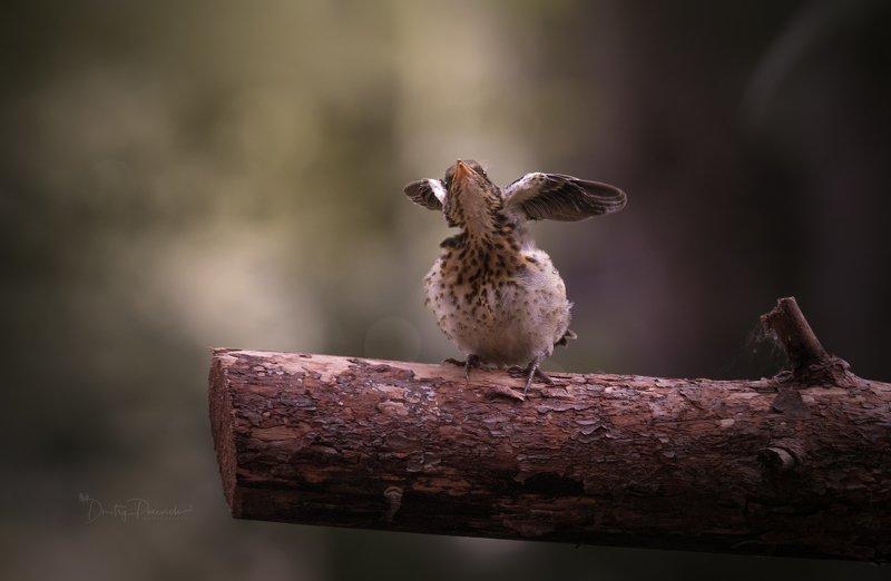 природа, лес, животные, птицы Ангелочек фото превью