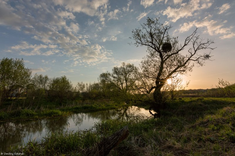 Пробуждение весныphoto preview