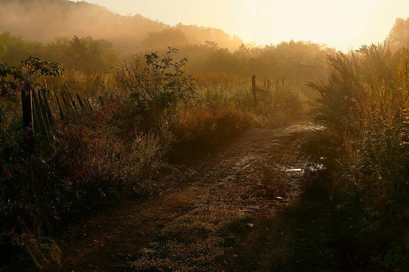 осень, утро, сентябрь, рассвет, дорога осеннее утроphoto preview
