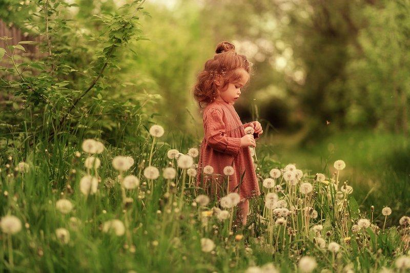 одуванчик, лето, зелень, дети, малышка, девочка, ребенок, солнце sonyaphoto preview