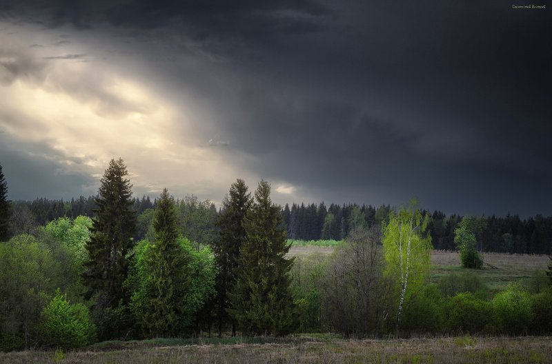 весна, лес, поляна, небо, пасмурно, облака, май Свет весныphoto preview