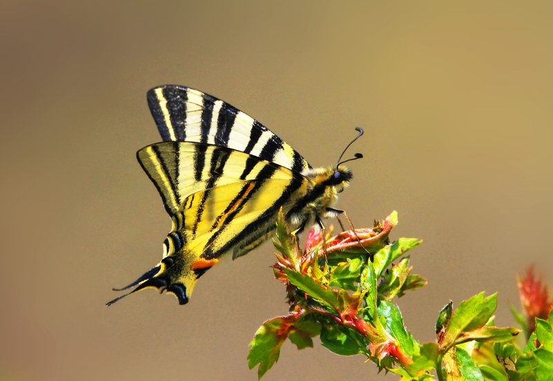 флора,фауна.бабочка,цветок.насекомое. *** фото превью
