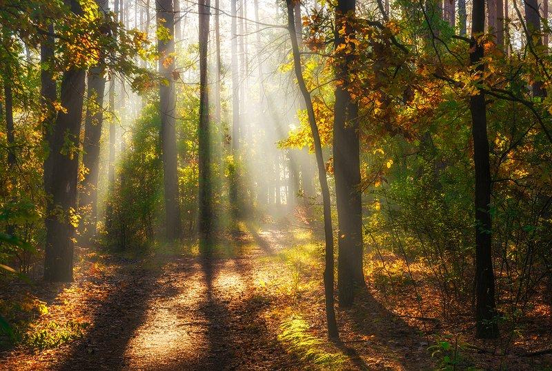 landscape, пейзаж, утро, лес,  деревья, солнечный свет,  солнце, природа, солнечные лучи,  прогулка, тропинка солнечное утроphoto preview