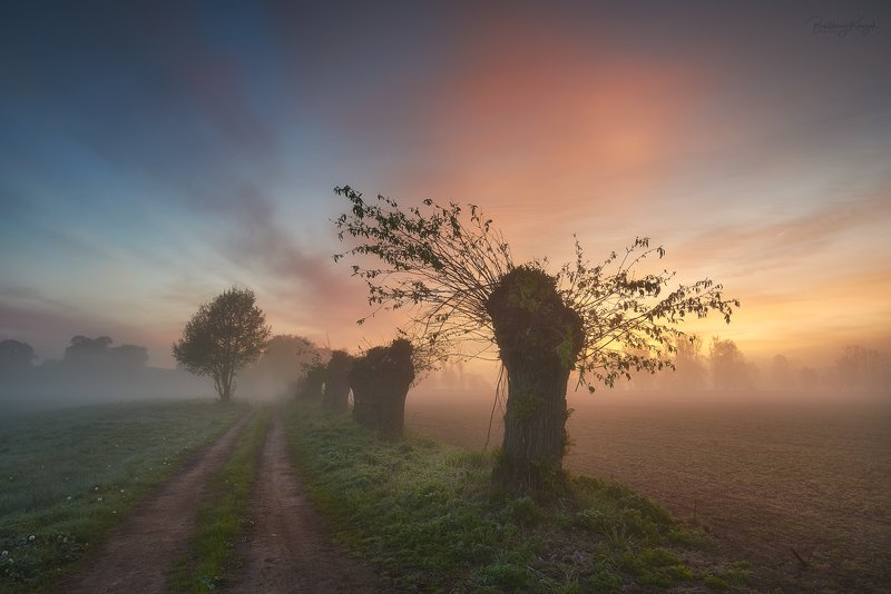 morning, ner, morning, dawn, spring, fog, willow, trees Foggy morning...photo preview