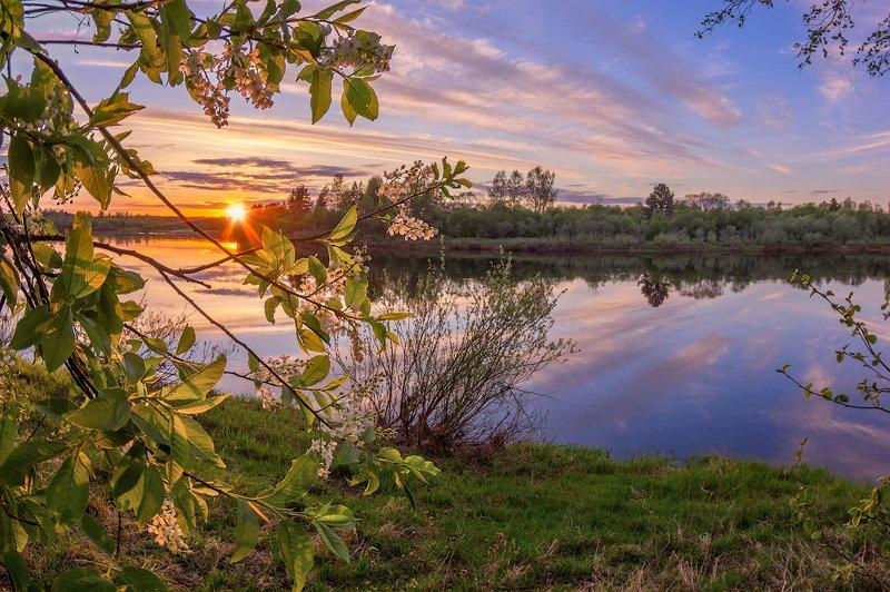 черемуха река закат вечер весна цветы зацвела черемуха...)photo preview