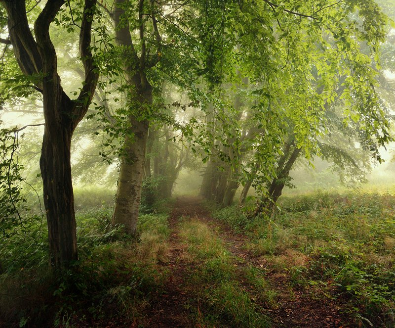 park old foggy morning path road mist magic spring dranikowski green nikon alley trees Old Parkphoto preview