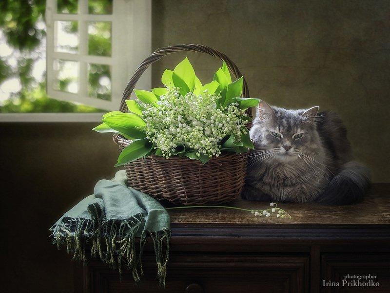 домашние животные, натюрморт, цветочный натюрморт, кошка Масяня, ландыши Уютная картинаphoto preview