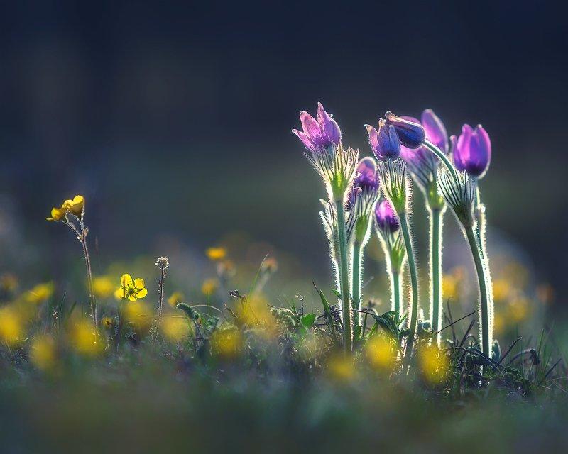 Весна идет! фото превью