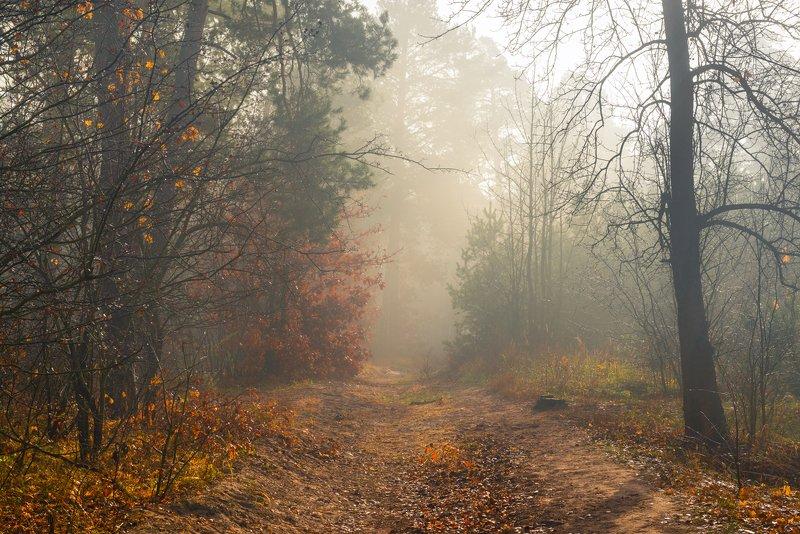 лес, осень, ноябрь, туман, белый, свет, рассвет Туманны тропы солнечного ноябряphoto preview