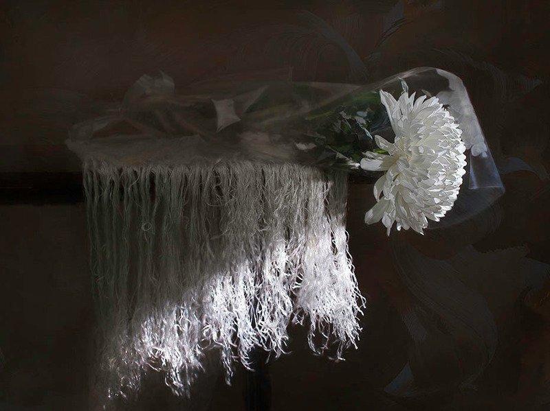 белая хризантемаphoto preview