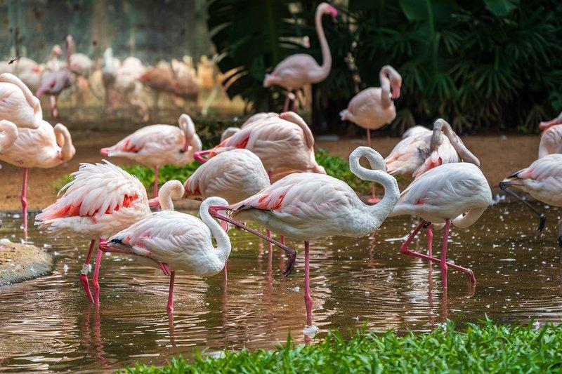 парк, птицы, фламинго, Parque das Aves, Бразилия Розовые фламинго в парке птиц Parque das Aves, Бразилияphoto preview