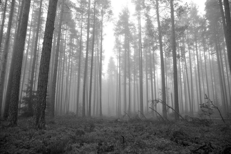 осень, туман, лес, утро Туманное осеннее утроphoto preview