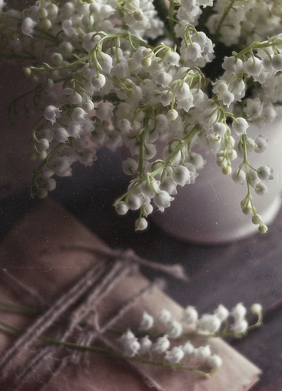 прозрачный аромат ландыша*photo preview