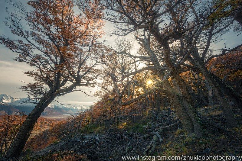 Осенние джунглиphoto preview
