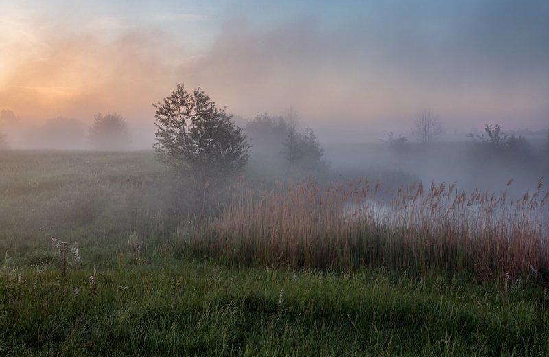 #пейзаж #туман #enhj Туман, туман, густая пеленаphoto preview
