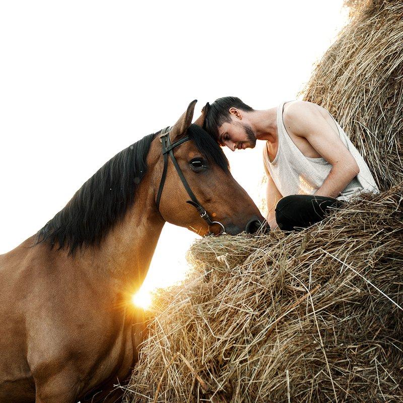 лето, лошадь, портрет На закатеphoto preview