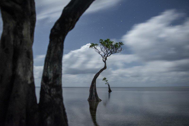 treephoto preview