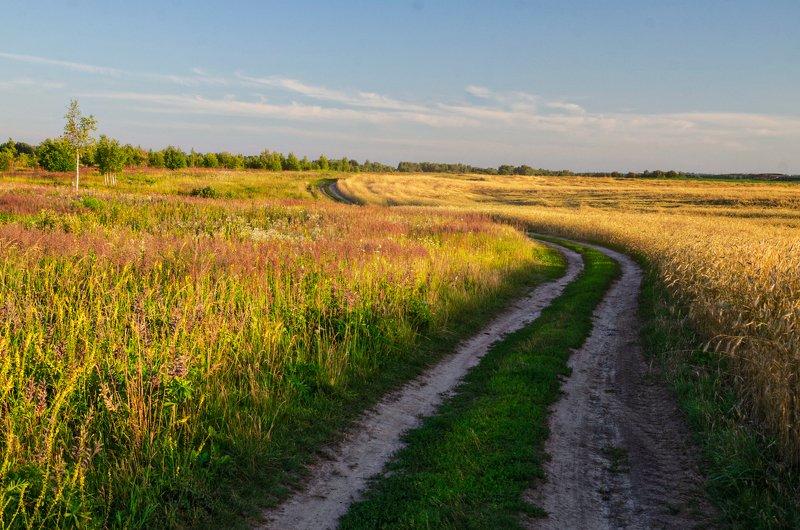 nevant60, пейзаж, красота, природа Цветущий июльphoto preview