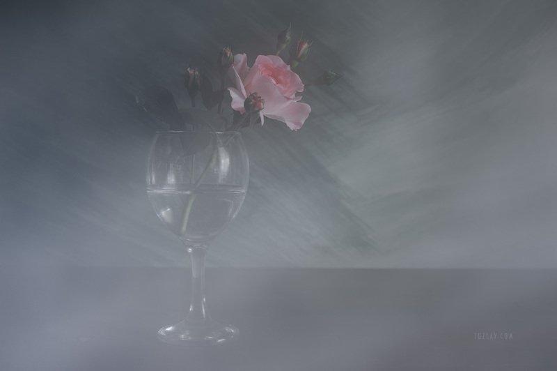 роза, розы, роза в бокале Про майские грёзы и розуphoto preview
