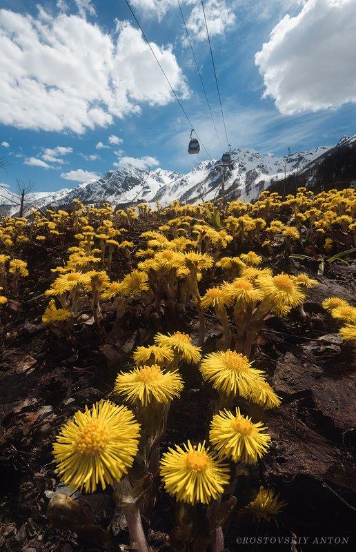 цветы, весна, горы, Сочи весна в горахphoto preview