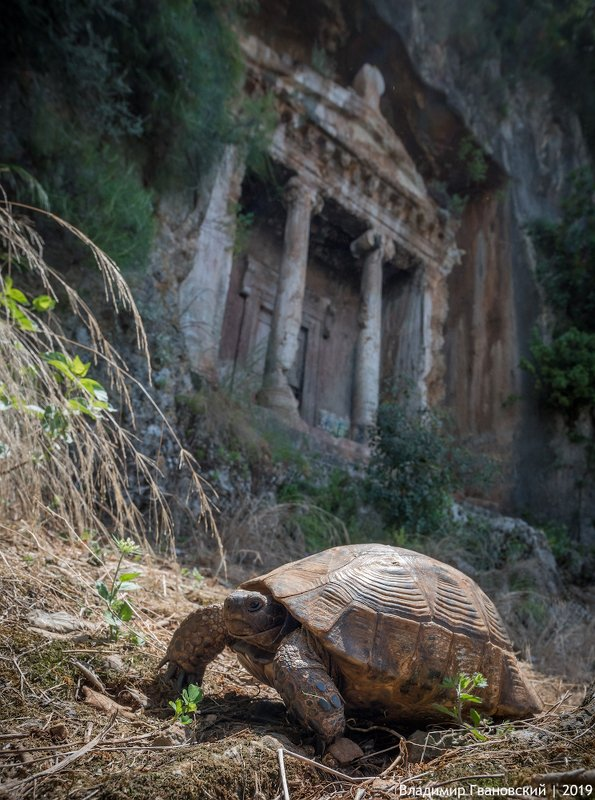 Черепаха у ликийской гробницыphoto preview