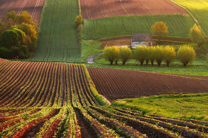 village, house, fields, morning, willows, countryside, hills, agriculture The housephoto preview