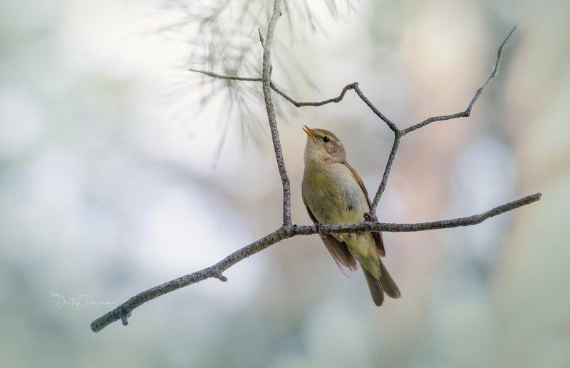 природа, лес, животные, птицы Ранняя пташка фото превью