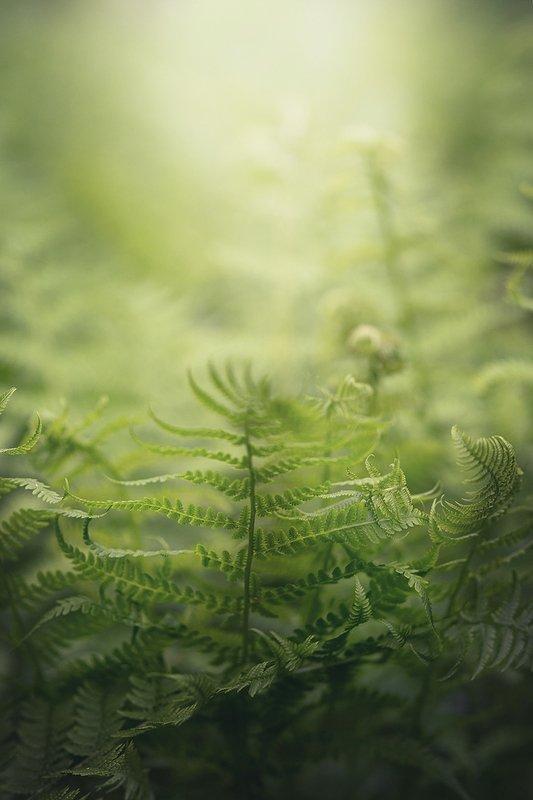 папоротник, зеленый, весна Папоротники разжимают свои кулачкиphoto preview