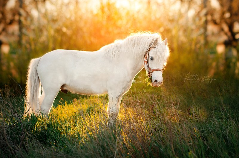 лошадь, анималистика, весна, портрет, закат Лошадкиphoto preview