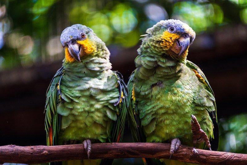 Попугаи, парк птиц, Parque das Aves, Бразилия Попугаи в парке птиц Parque das Aves, Бразилияphoto preview