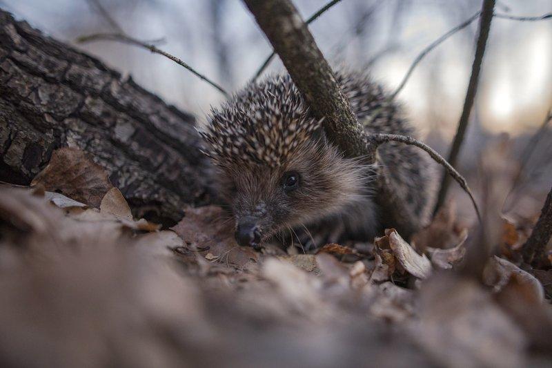 животные, макро, вечер, природа Опасный зверьphoto preview