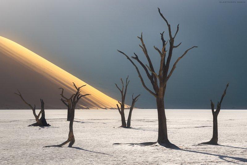 Namibia, desert, sand, dunes, sun, light, trees, explore, travel, outdoor, Africa, horizon, пустыня, путешествия, Африка, песок, дюны, солнце, деревья, озеро, долина, закат, горизонт Hands of the Desertphoto preview