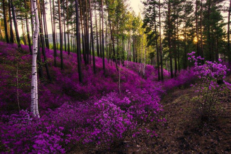 Весна в разгареphoto preview
