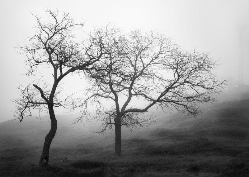 черно белое, пейзаж, Керчь, Дерево, тени, без фотошопа Танецphoto preview