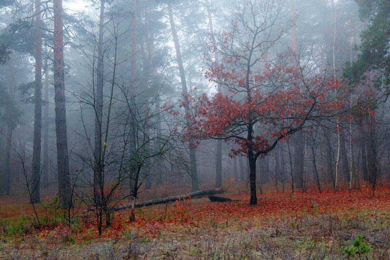лес, осень, ноябрь, туман Серые сумеркиphoto preview