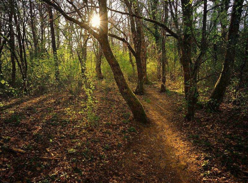 свет, тени, листва, март, monts d\\\'or, lyon пробудившийся лесphoto preview