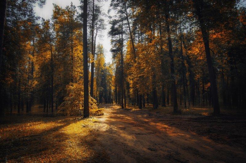 В волшебном осеннем лесуphoto preview