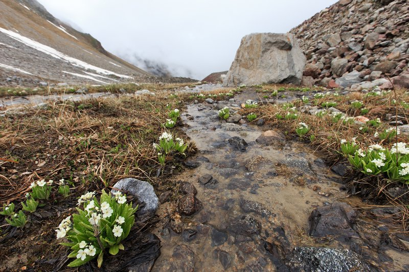 alpine flowersphoto preview