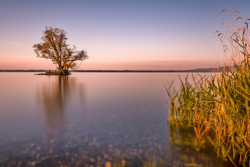 long esposure,lake,switzeland,tree,water,sunset, Silent in the Artphoto preview